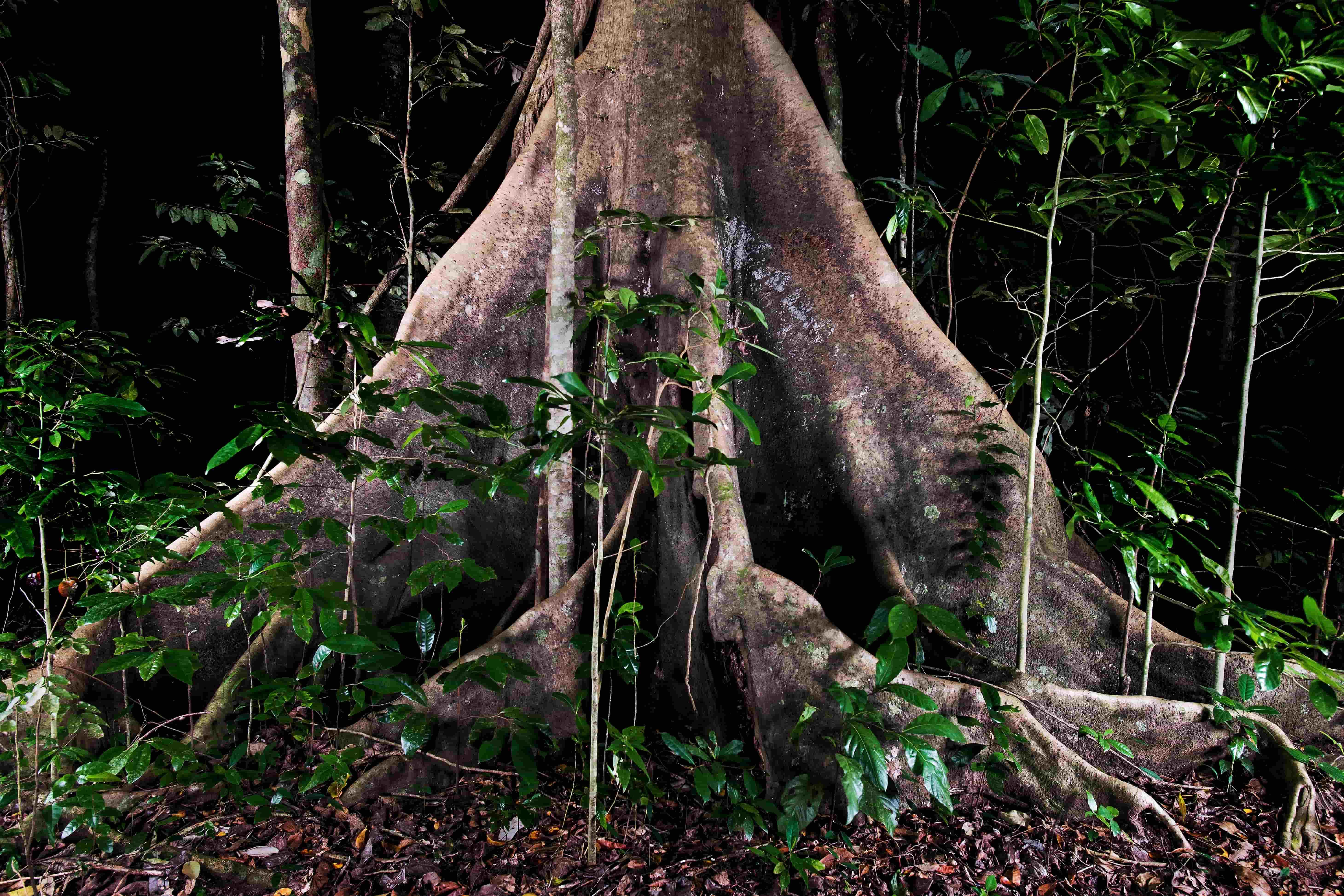 Tree roots in rain